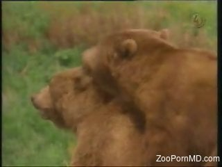 Two wild bears fucking in the middle of nowhere