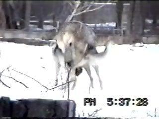 Animals enjoying wild fucking while outdoors