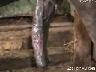 zoofiliaxxxvideo