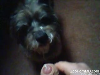 Man leaves his furry friend to lick his dick while masturbating
