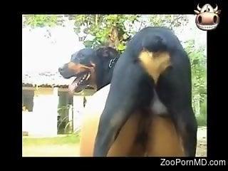 Big dog ass fucks hot woman and cums on her ass