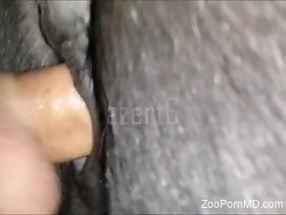 Horny man sticks his whole penis into a horse ass