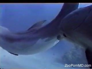 Underwater zoo kinks with man enjoying dolphins mate