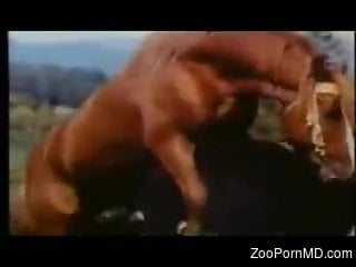 Man drools for dick when seeing the stallion fucking his female