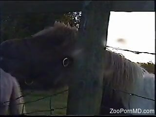 Horny man approaches the black horse and gives it the dick