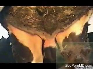 Close-up porno movie focusing on a very hot animal