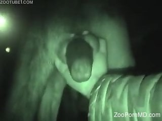 Hot zoophile jerking a beautiful animal cock on cam