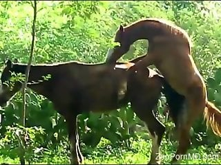 Horses horsing around in a hardcore porno movie