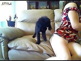 Animal Pornography